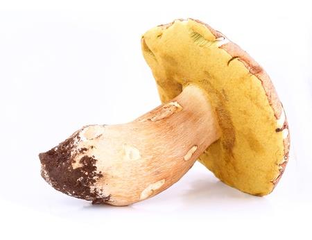 edulis: Mushroom  Boletus edulis  isolated over white Stock Photo