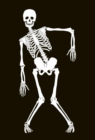 seres humanos: El esqueleto divertido vector aislado m�s negro. Dise�o de Halloween