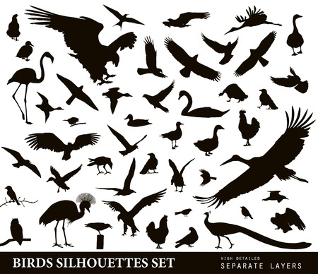 outline bird: Birds vector silhouettes set. Illustration