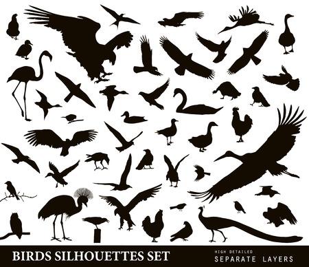 flamenco ave: Siluetas Aves de vectores.