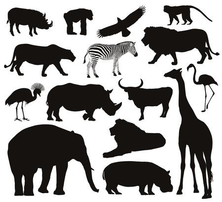 animales del bosque: Animales africanos establecen siluetas ilustraci�n vectorial