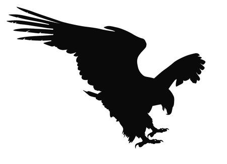 adler silhouette: Jagdadler detaillierten Vektor-Silhouette Illustration