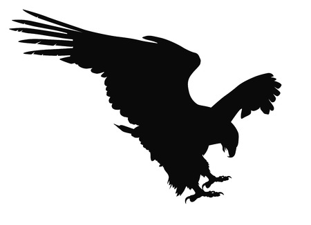 Hunting eagle detailed vector silhouette