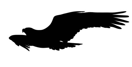 black and white image: Flying eagle vector silhouette. Illustration