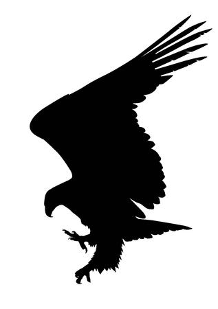 halcón: Caza de la silueta del águila Vectores