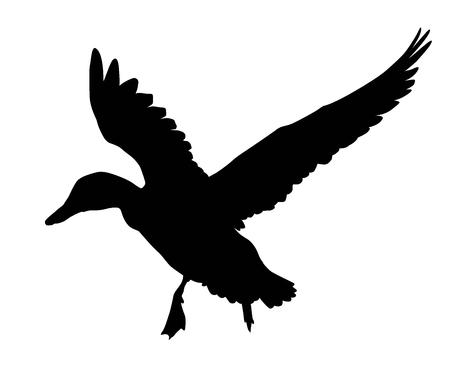 Vliegende eend silhouet. Vector, EPS, 8 Stock Illustratie