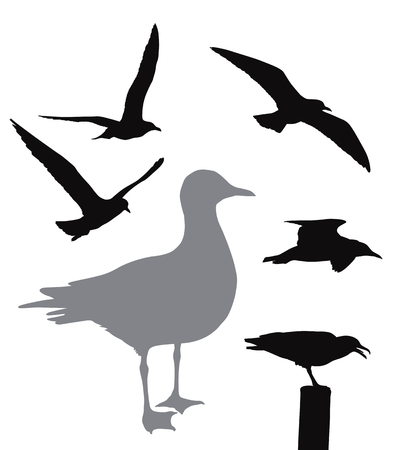 soar: Vector seagull collection