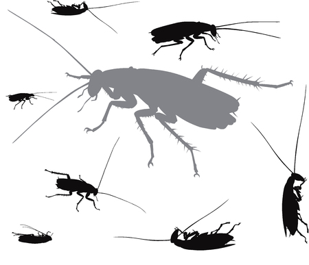 Vector insects collection  イラスト・ベクター素材
