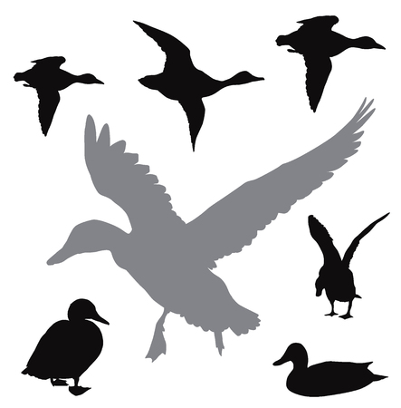 Collection de canards de vecteur Banque d'images - 82815576