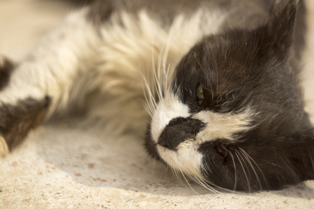 one eye: Lonely sick homeless cat with one eye Stock Photo