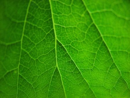 nervure: Green leavs detalles
