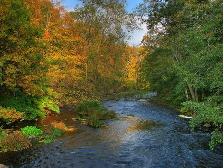 colorful autumn river with trees red, green and yellow