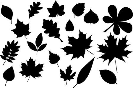 leaves silhouette Stock Vector - 3446621