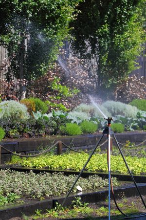 sprinkler in the garden Stock Photo