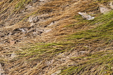sapless: Background of dry grass