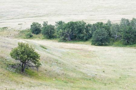 copse: Rural landscape. Forest steppe