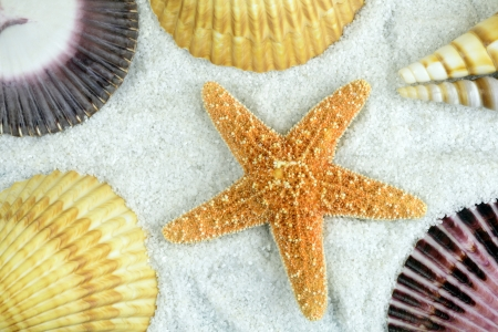 Set of seashells on the beach  Stock Photo - 18445846