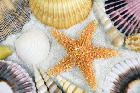 Set of seashells on the beach