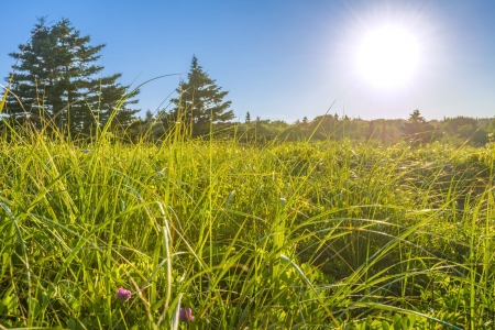 crescent: Field of grass with blue sky and sunlight  Crystal Crescent Beach, Nova Scotia, Canada