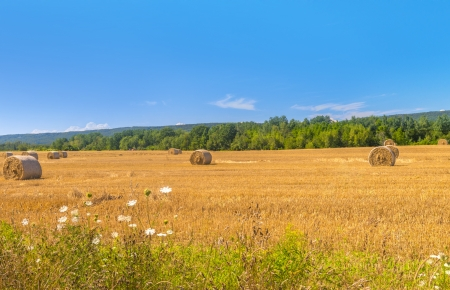 Farm field with hay bales  Nova Scotia, Canada  photo