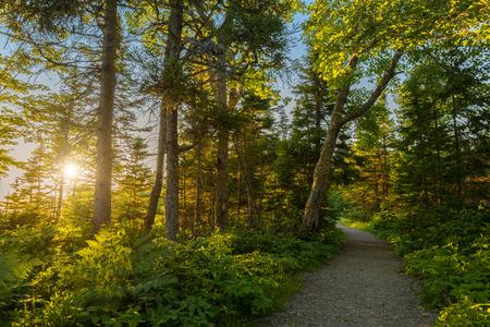 warren: Warren lake path in Cape Breton Highlands National Park, Canada
