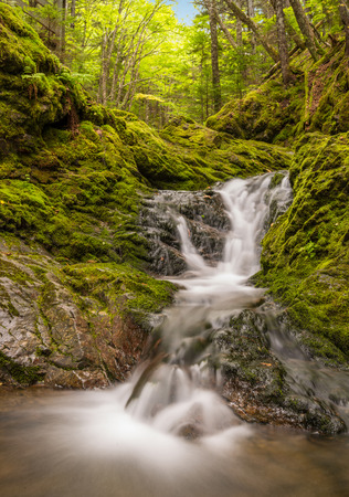provincial forest parks: Small waterfall in the park (Dickson Falls, Fundy National Park,New Brunswick, Canada)