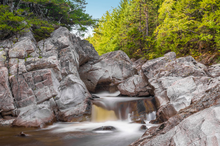 broad leaf: Broad River Along Moose Horn Trail  (Fundy National Park, New Brunswick, Canada) Stock Photo