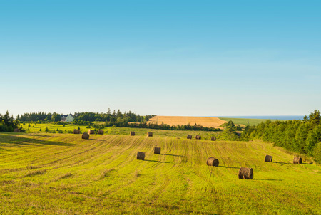 Scenic view of hay stacks on sunny day Central Coastal Drive, Prince Edward Island, Canada