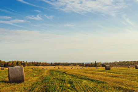 Scenic view of hay stacks at fall  North Cape Coastal Drive, Prince Edward Island, Canada