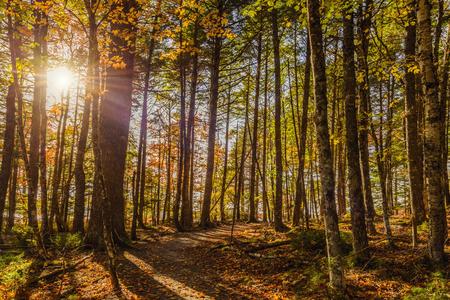 scotia: Forest Trail in Fall Kejimkujik National Park , Nova Scotia, Canada Stock Photo