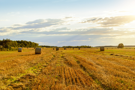 Scenic view of hay stacks on sunny day (Prince Edward Island, Canada) Stock fotó