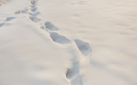 dint: Human Footprints on white snow winter cold