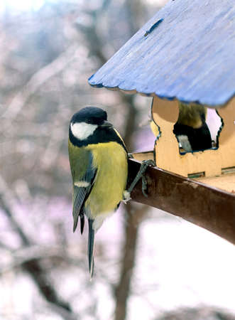 The great tit is sitting on a bird feeder against the backdrop of a snow-covered street.