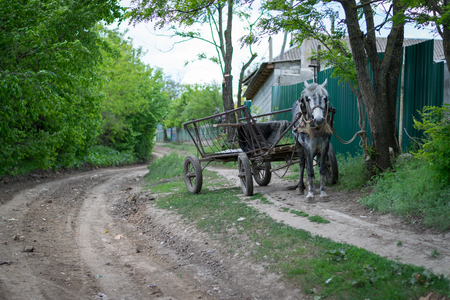 A cart without a carter waiting nearby a village road