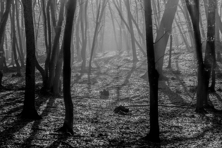 Hoia Baciu Forest - World's Most Haunted Forest with a reputation for many intense paranormal activity and unexplained events. Inside Hoia Baciu Haunted Forest in Cluj-Napoca, Transylvania, Romania