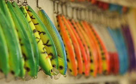 The bait for fishing, the bait for fishing, sport fishing