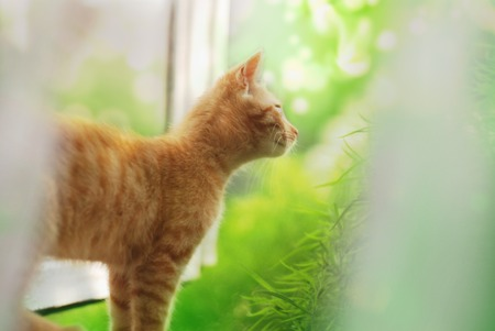 Summer day and Cat on a background of greenery.