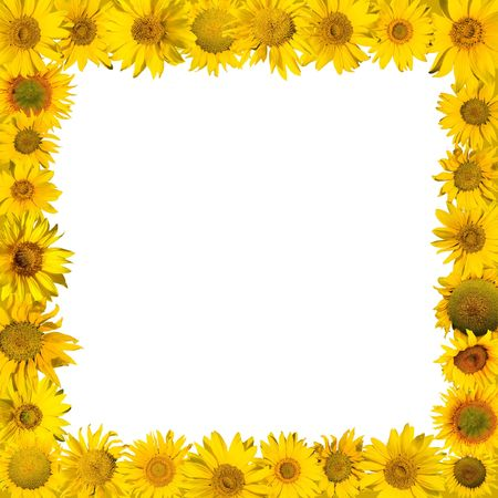 sunflowers frame composed  photo
