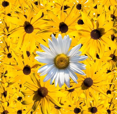 Daisy flowers collection Stock Photo - 6037596