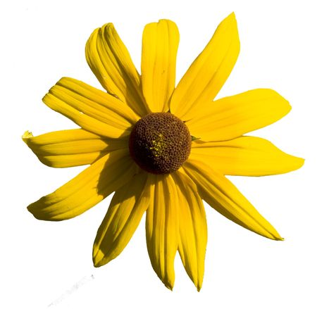 Daisy flower isolated over white background Stock Photo - 6033961