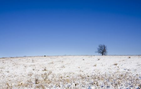 winter landscape with the lonely tree photo