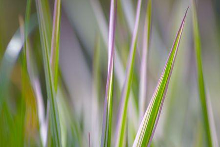 Fresh grass photo