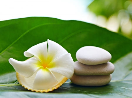 Frangipani flower and stones for SPA on a green leaf photo
