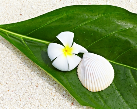 Frangipani flower and seashell on a green leaf on the sand photo