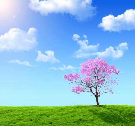 green field and pink tree on a background of the blue sky photo