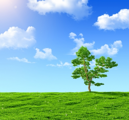 green field and  tree on a background of the blue sky photo