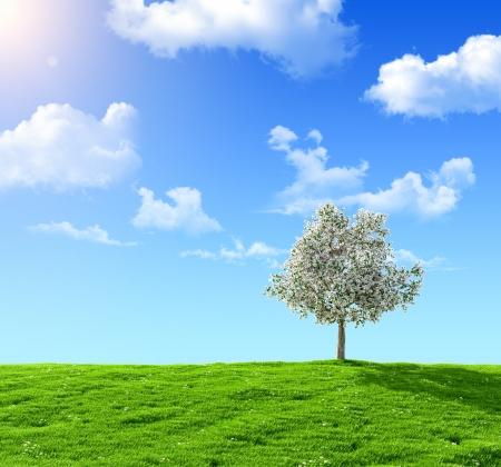 groen veld en bloeiende boom op een achtergrond van de blauwe hemel Stockfoto