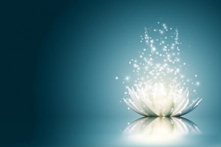lirio acuatico: Magia Flor de loto