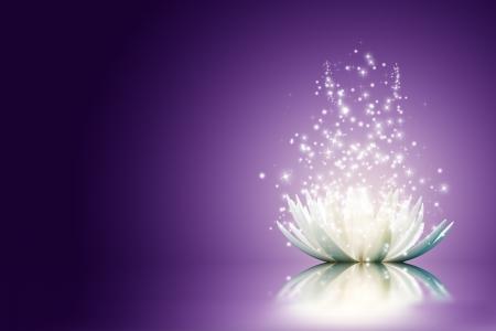 flor violeta: Magia Flor de loto