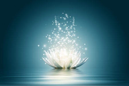 Magic Lotus flower Stock Photo - 14602178